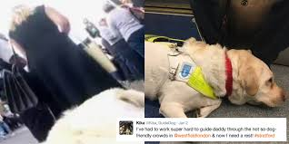 Blind Dog And His Guide Dog This Man Put A Gopro On His Guide Dog To Show How People Treat