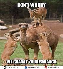 goat memes