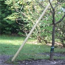 tree stakes redwood plant tree stakes 25mm sq x 1 2m 5 pack harrod