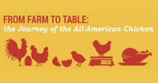 from farm to table farm to table chicken check in