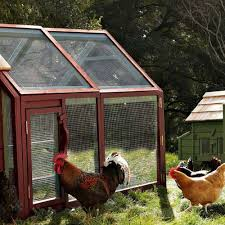 alexandria chicken coop and run the green head
