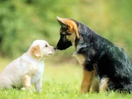 Dog Wallpapers Adorable Dog Photos Cute Wallpapers Download Free Cute Hd Cute