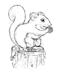 squirrel sketch by bluefootednewt on deviantart