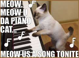 Piano Memes - great cats be funny blog we are cats here us meow