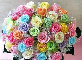colorful roses colorful bouquet pictures photos and images for