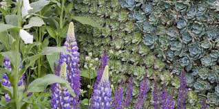 gardening ideas how to create a living wall out of plants