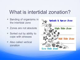 cope class online the intertidal zone sources used in the creation of this