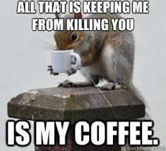 Coffee Meme Images - squirrel meme squirrel coffee meme google search looks like me