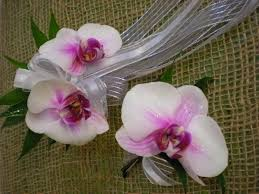 White Orchid Corsage Phalaenopsis Orchid Corsage Every Bloomin U0027 Thing
