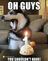 Birthday Dog Meme - 20 very funny birthday animal pictures and images