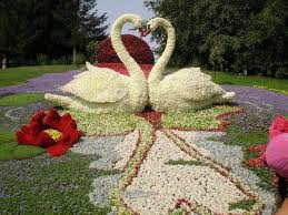 30 best fabulous flowers u0026 gardens images on pinterest garden