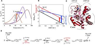 square root of 289 evolutionary drivers of thermoadaptation in enzyme catalysis science