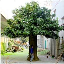 sale live ficus tree large outdoor artificial trees buy 2017