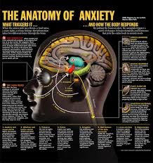 What Portion Of The Brain Controls Respiration Best 20 Anatomy Of The Body Ideas On Pinterest Body Bones