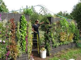 46 best gardens vertical vegetable gardens images on pinterest