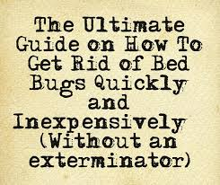 One Bed Bug 59 Best Bed Bugs Remedies Images On Pinterest Bed Bug Remedies