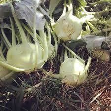 21 vegetables for the fall garden