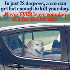 Dog In Car Meme - vegan street the daily meme archive