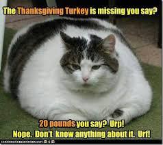 Thanksgiving Cat Meme - thanksgiving turkey humor cat meme thanksgiving fall pinterest