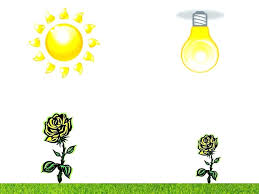 sunlight l for plants does a plant grow better in sunlight or artificial light proper