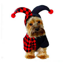 dog halloween costumes 2017 popular toy dog costumes buy cheap toy dog costumes lots from