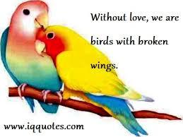bird quotes bird quote bird quotations quotes