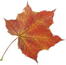 autumn leaf eight isolated stock photo by nobacks com
