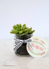 Generic Gift Ideas Diy Succulent Gift Idea Free Printable Teacher And Succulent Gifts