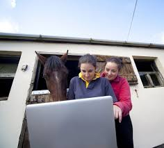 guide internet horse sim games