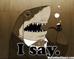 I Say Meme - i say shark memes