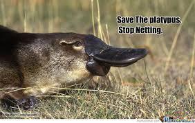 Platypus Meme - save platypus by guest 214 meme center