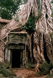 best 25 ta prohm ideas on angkor wat cambodia angkor