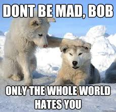 Dont Be Mad Meme - dont be mad bob only the whole world hates you caring husky