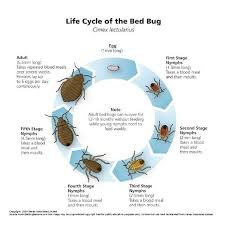 What Temperature Do Bed Bugs Die If Bed Bug Eggs Hatch In A Vacant Home How Long Can The Nymphs