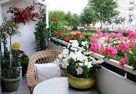 Flowers For Backyard by Garden Design Garden Design With Best Flowers For Balcony Garden