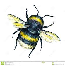 bumblebee on a white background watercolor drawing insects art