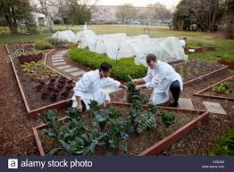 white house chefs kevin saiyasak and jeremy kapper harvest winter