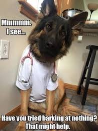 Dog Doctor Meme - so this why sammy hides his balls from us dogs pinterest