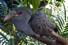 four unusual aussie animals to spot in your garden this summer