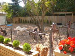 veterinary pet health care 8 droolworthy dog friendly backyards