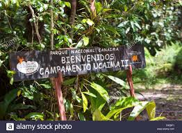 green deep forest with wooden welcome sign canaima national park