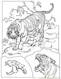 lion tiger coloring 022 coloring free tiger coloring