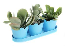 Indoor Succulent Container Gardens How To Propagate Succulents Hgtv