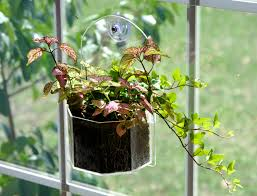 window planter grow plants indoors and outdoors from your
