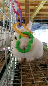 Large Bunny Cage Best 25 Rabbit Toys Ideas Only On Pinterest Rabbit Ideas Pet