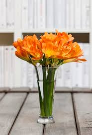 Flowers Glass Vase Bouquet Of Orange Clivia Flowers In Glass Vase Stock Photo