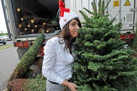 trees on sale today