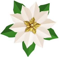 white poinsettia christmas white poinsettia png clip image gallery