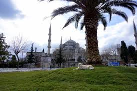 Colorado is it safe to travel to istanbul images Is istanbul safe to visit now as a woman anna everywhere jpg