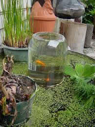 add a glass jar tower to your water garden and see your fish swim